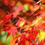 京都のおすすめ紅葉スポット「永観堂」「東福寺」「清水寺」