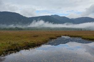 尾瀬の草紅葉と霧