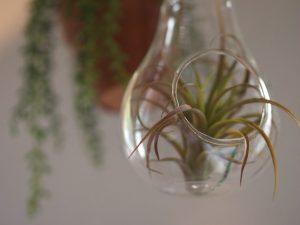 ガラス電球を利用したテラリウム
