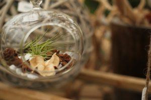 おしゃれな丸いガラス製の容器のテラリウム