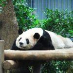 上野動物園へ行ってきた。2歳の娘を連れての遠出は壮絶すぎました!