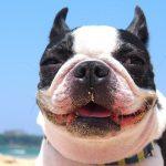 犬のマーキングとマウンティングの対処方法