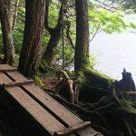 白駒の池でハイキングをしてきました