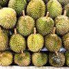 バンコクでドリアンに挑戦!気になる値段、臭い、味、お土産とは?